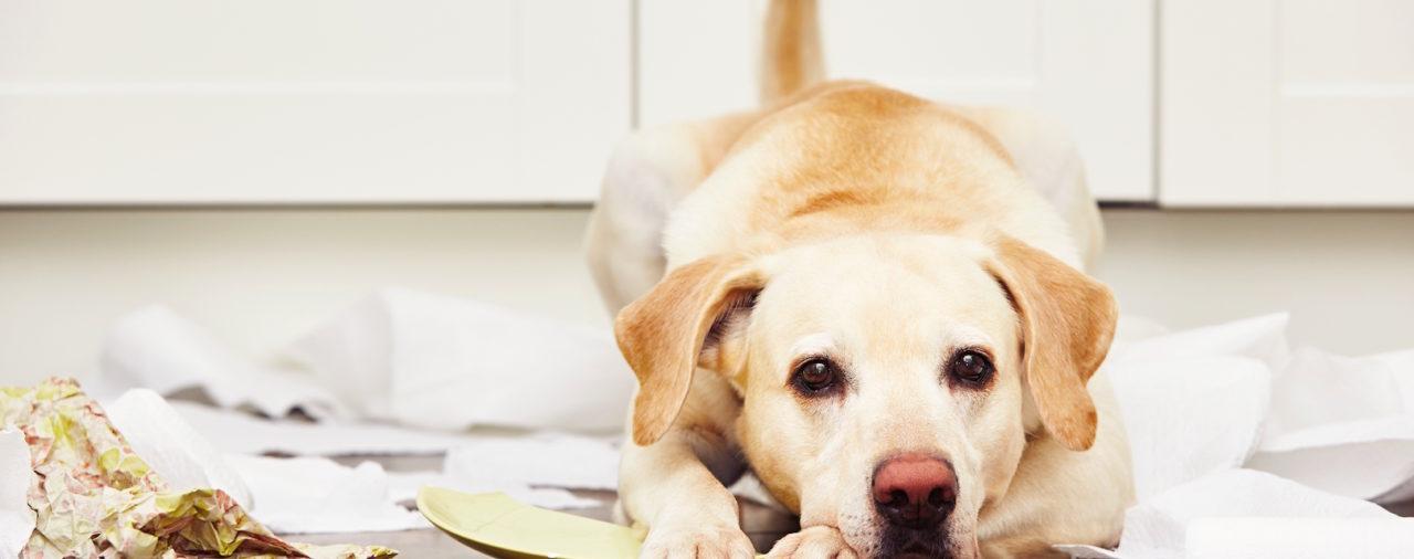 Muss das Jobcenter die Kosten für eine Hundehaftpflichtversicherung bezahlen?